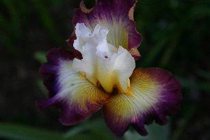 Starship Enterprise iris